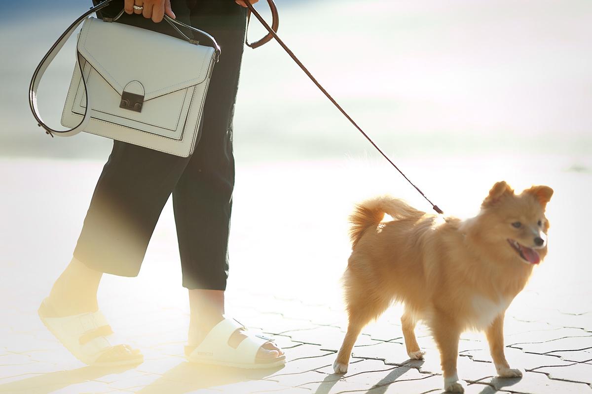 loeffler-randall-satchel