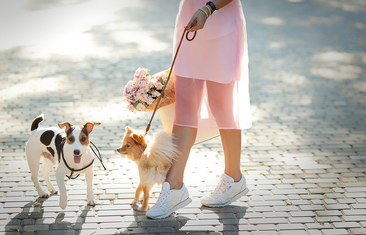 cute-fashion-snap-with-puppies