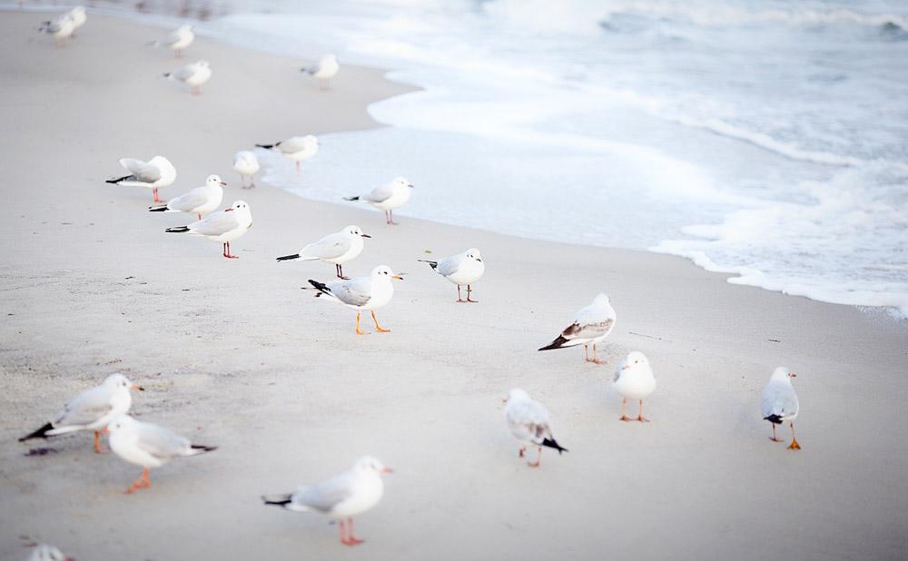 seagulls+odessa-ukraine